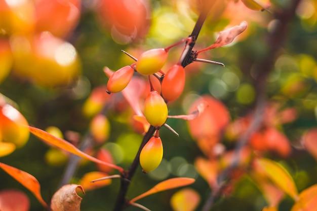 Красная ягода на ветке дерева