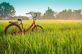 Red bicycle with rural view background
