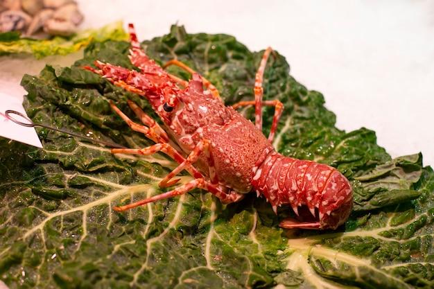 氷の上のザリガニとしても知られている赤い大きなイセエビ。