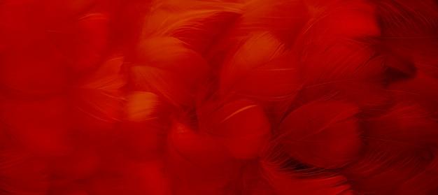 빨간 새 깃털 배경 흐리게