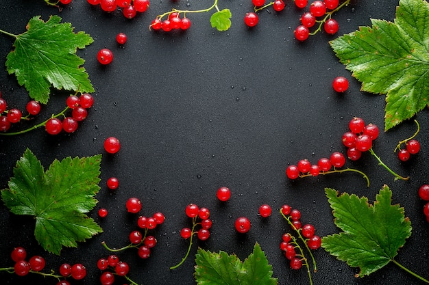 Red and black currants with leaves on a black background with water drops. free space for text. top view.