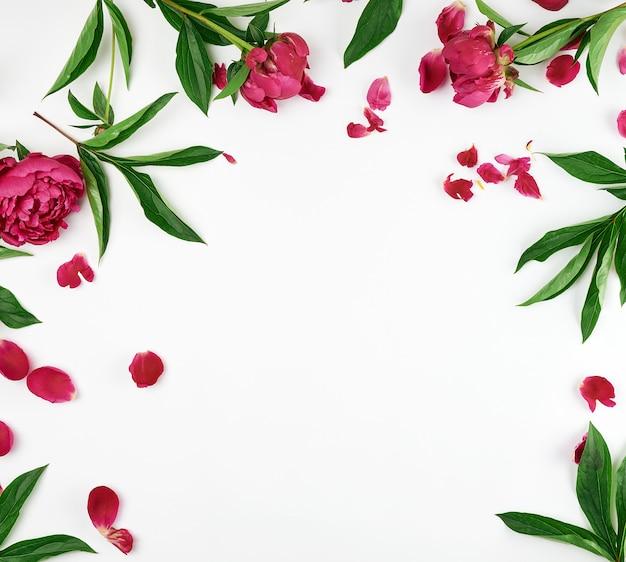 Red blooming peonies