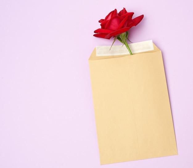 Red blooming rose and brown paper envelope on a purple background