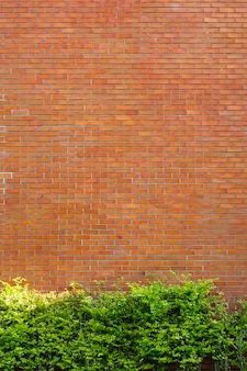 Red brick wall fragment background with green plant.