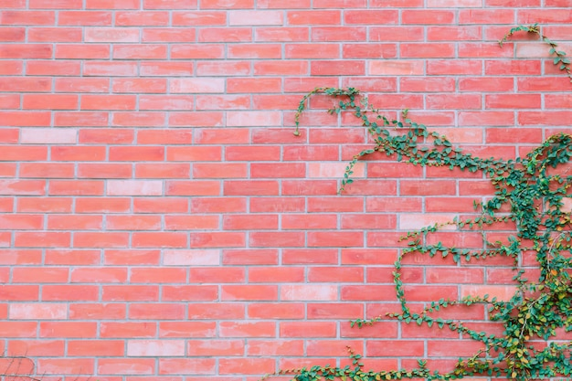 Red brick wall with green ivy background