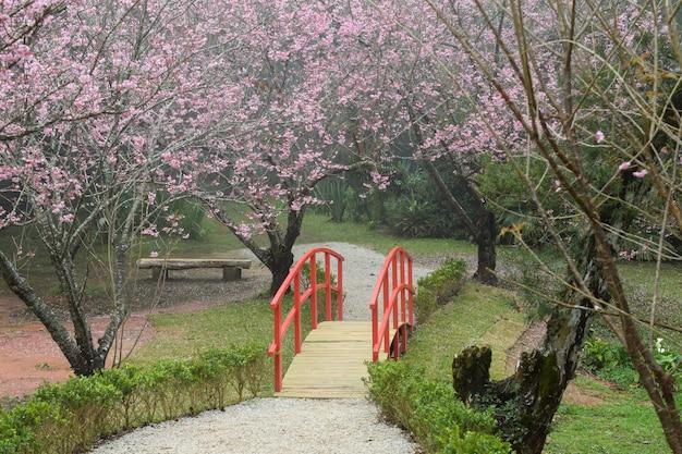 Red bridge in cherry park
