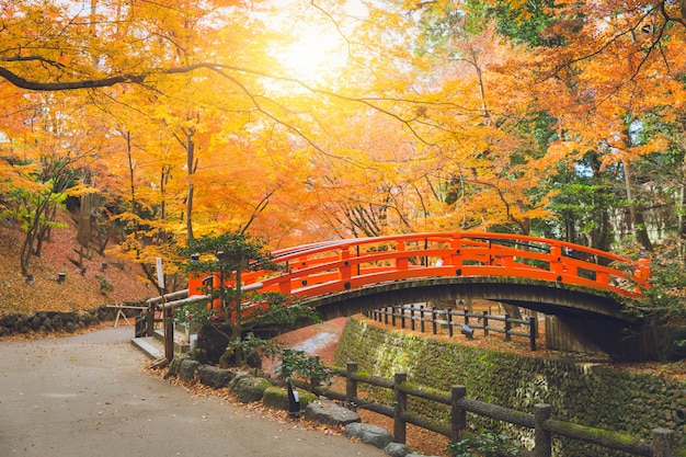 Red bridge in maple forest colorful autumn in japan
