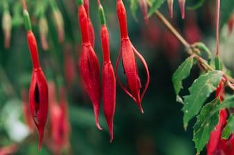 Red bright flower in the garden