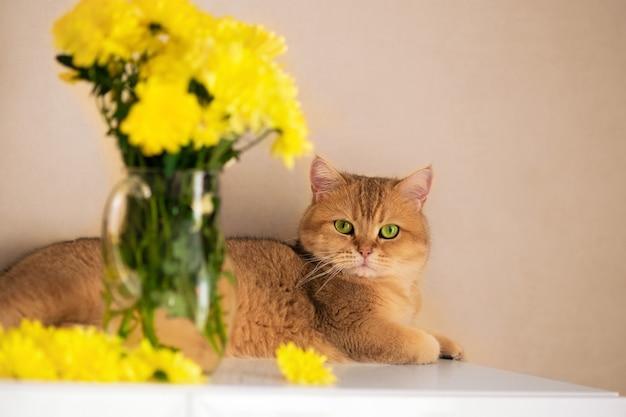 Рыжий британский кот лежит возле стеклянной вазы с желтыми цветами