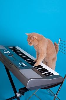 빨간 영국 고양이는 의자에 서있는 동안 발로 전자 신디사이저의 키를 연주합니다.