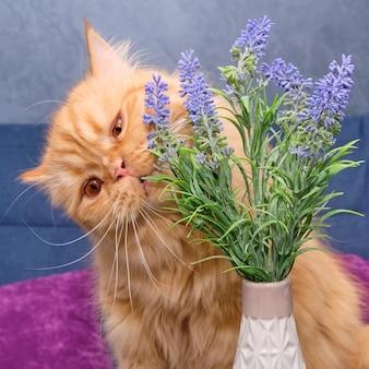 花を嗅ぐ赤いブリティッシュ猫