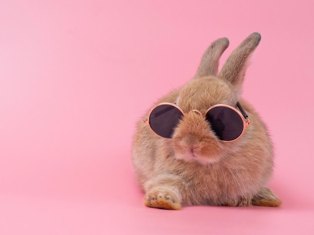 Red-brown cute baby rabbit wearing glasses sitting.