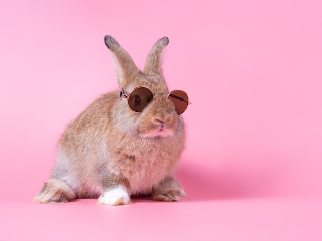 Red-brown cute baby rabbit wearing sunglasses sitting on pink wall.