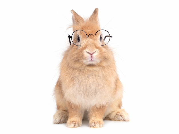 Red-brown cute rabbit wearing glasses sitting isolated on white wall