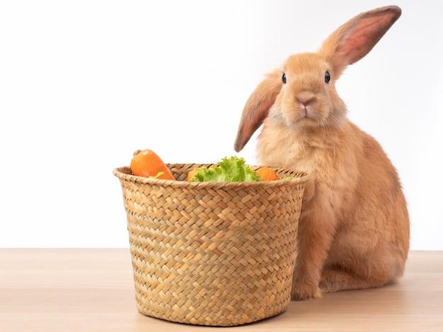 赤茶色のウサギと木製のテーブルにレタスとニンジンのバスケット。ウサギは野菜を食べるのが好きです。