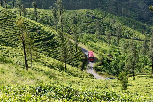 Red bus in tea plantation in sri lanka