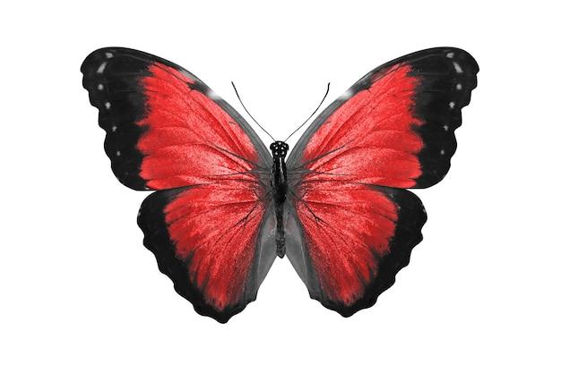 Красная бабочка. естественное насекомое. изолированные на белом фоне