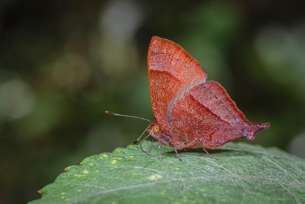 Красная бабочка сидит на большом зеленом листе