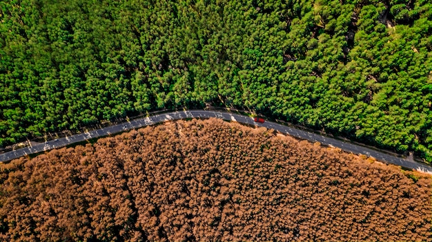 Red car rides on a forest road aerial drone