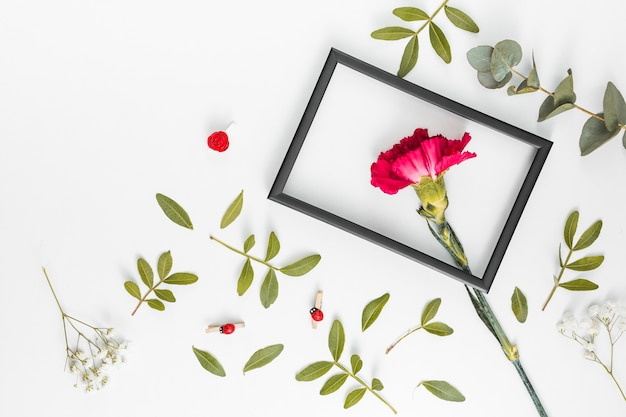 Red carnation flower with frame on table