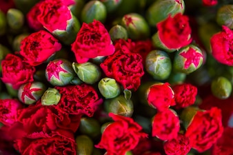 Red carnation flowers textured background