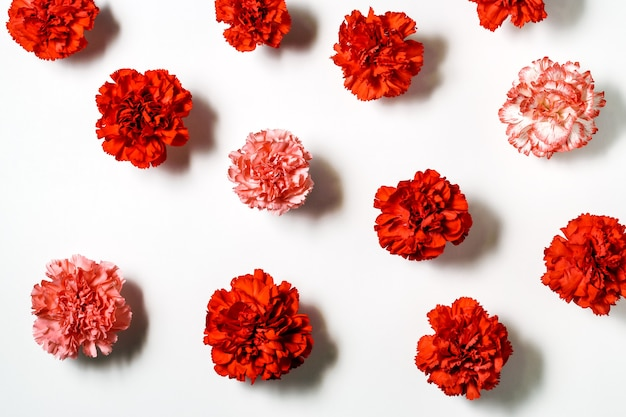 Red carnations flowers on white background