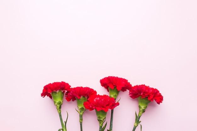 복사 공간와 분홍색 배경에 빨간 카네이션. 어머니의 날 카드, 발렌타인 데이.