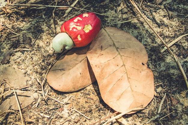 Red cashew nuts fall down to the soil floor
