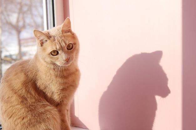 빨간 고양이와 그림자. 고양이가 창틀에 앉아있다.