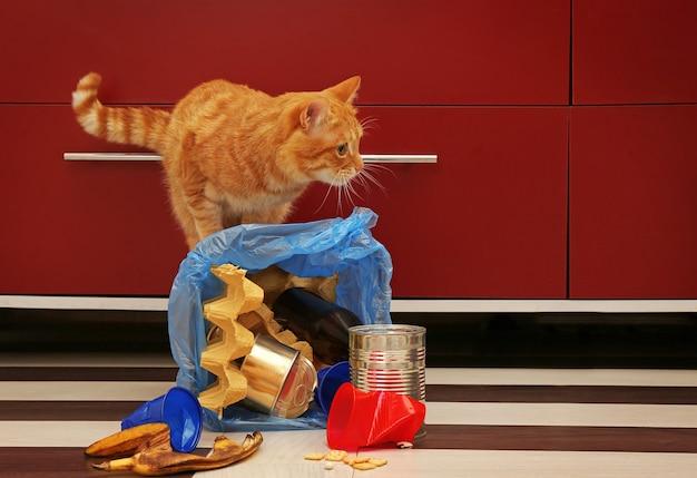 台所の床の完全に逆さまのゴミかごで赤い猫