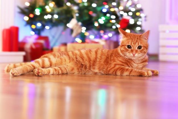 크리스마스 시간에 집에 있는 빨간 고양이