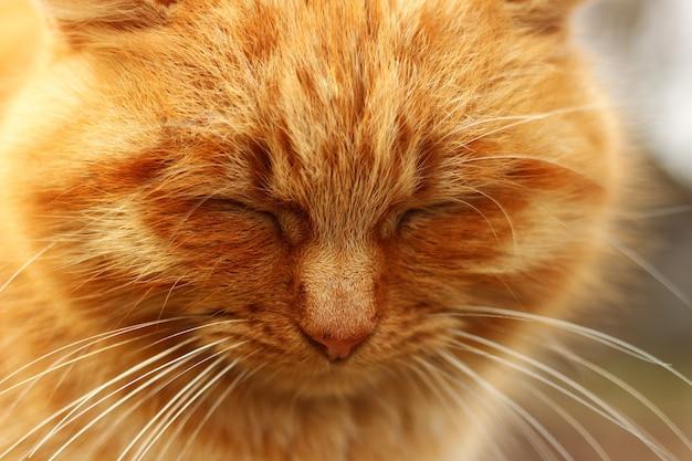 빨간 고양이가 가까이