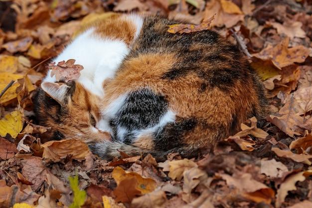 秋の秋に隠された赤い猫。葉のかわいい家畜。