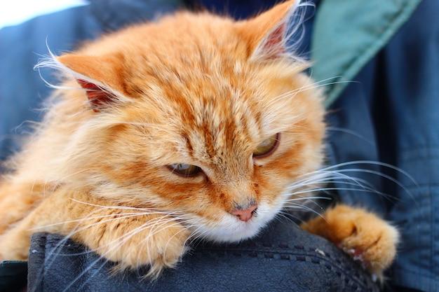 빨간 고양이는 슬프거나 불쾌합니다.