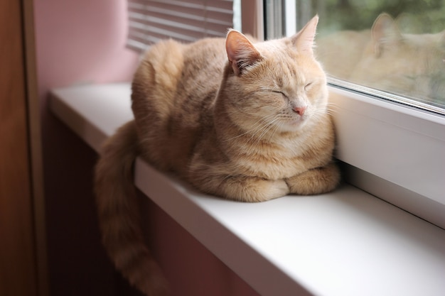 Red cat is sleeping on the windowsill
