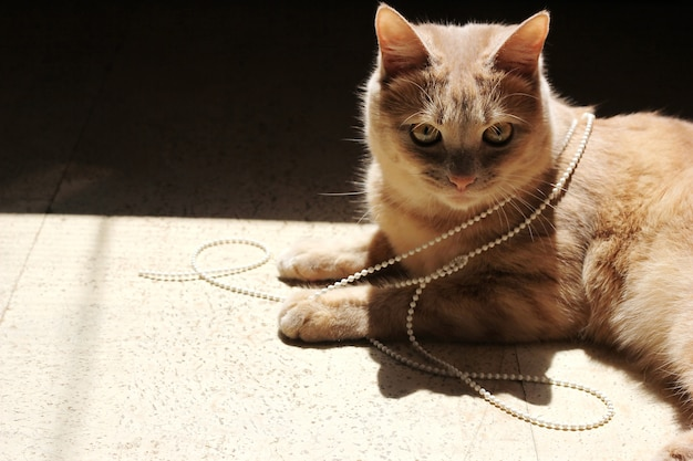 The red cat lies on the floor in the bright sunlight. a broken chain from the blinds on it