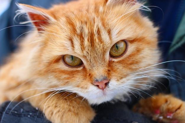 빨간 고양이 보이는 클로즈업
