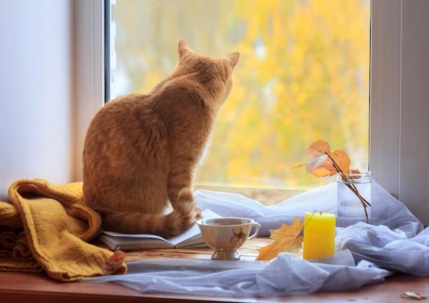 Рыжий кот смотрит в окно. желтые деревья на заднем плане. концепция одиночества в современном мире.