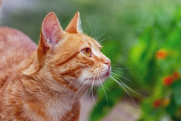 빨간 고양이 조회