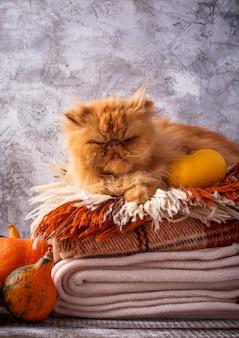 Рыжий кот лежит на стопке пледов