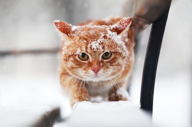 Рыжий кот на скамейке в парке на фоне снегопада
