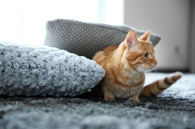 床に赤い猫、クローズアップ