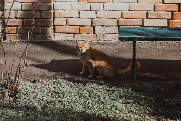Red cat outdoor