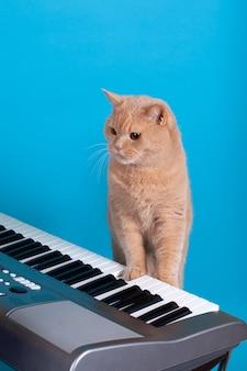 Рыжий кот играет музыку лапой на клавише пианино
