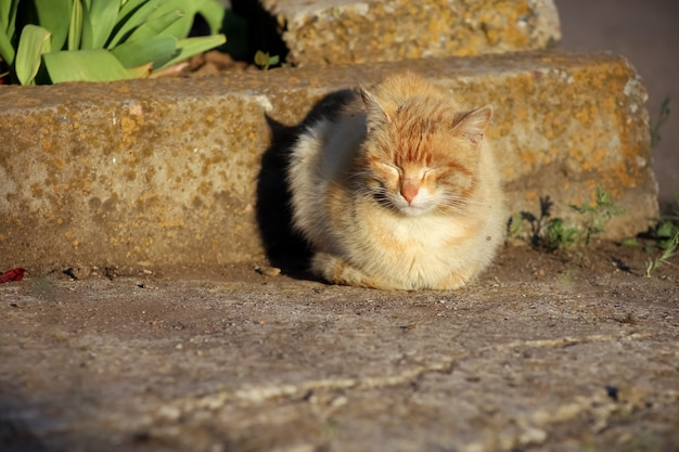 A red cat sits on the asphalt near a flower bed