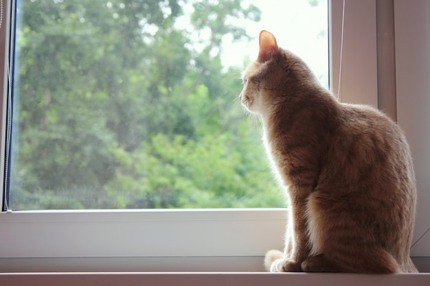 Red cat sits back on the windowsill and looks out the window