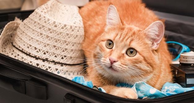 Рыжий кот сидит в чемодане с вещами