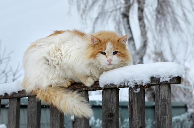 Рыжий кот сидит на старом заборе в деревне в пасмурный зимний день