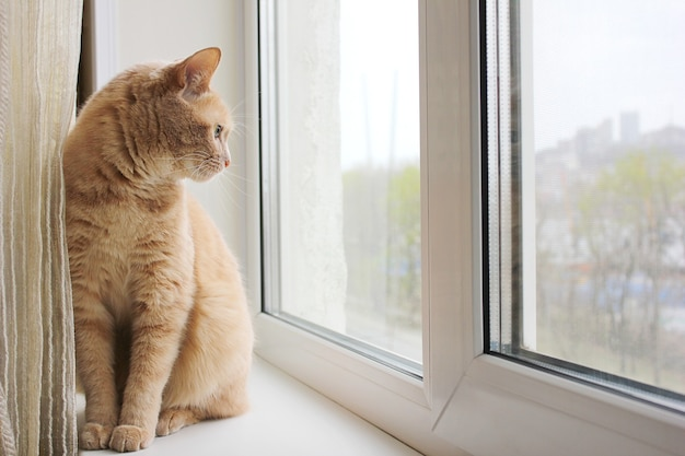 A red cat sitting on the windowsill and looking out the window. the life of pets.