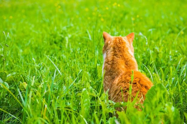 背を向けて座っている赤い猫は草をオン